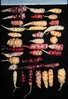 oca types